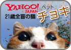 Yahoo! japan �ڥå�
